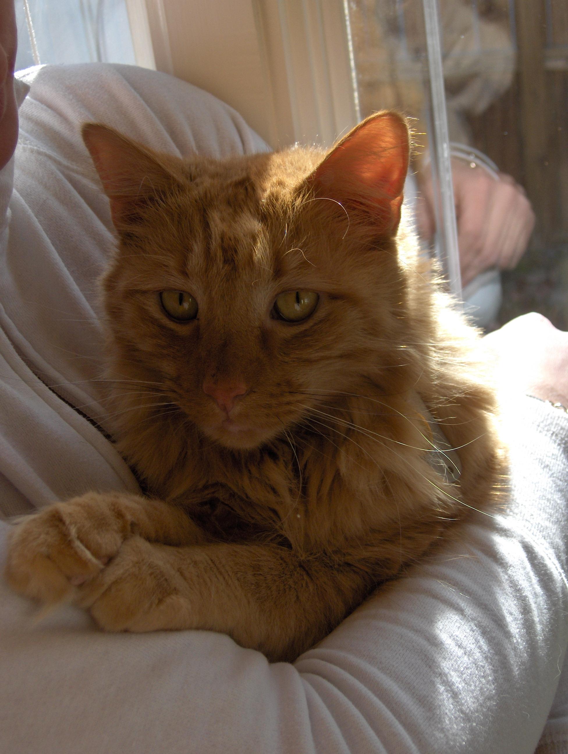 TVRH triangle veterinary referral hospital trianglevrh Atticus.JPG