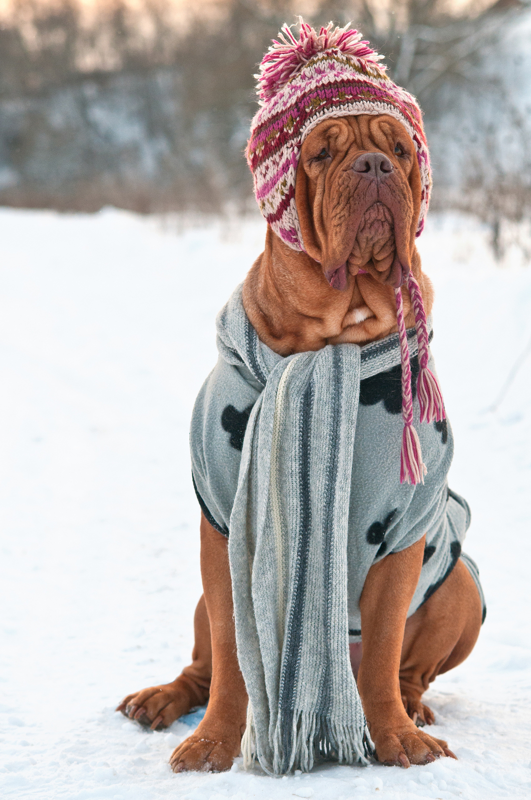 TVRH triangle veterinary hospital triangevrh dog in snow.jpg
