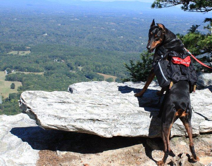 tvrh blog dog hiking