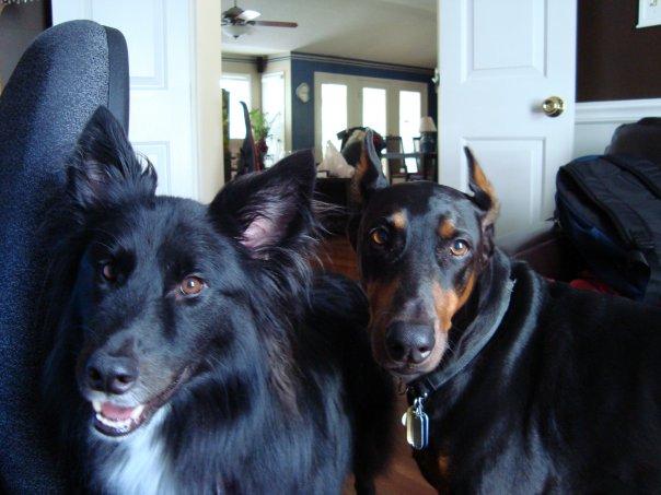 blog tvrh dog friends