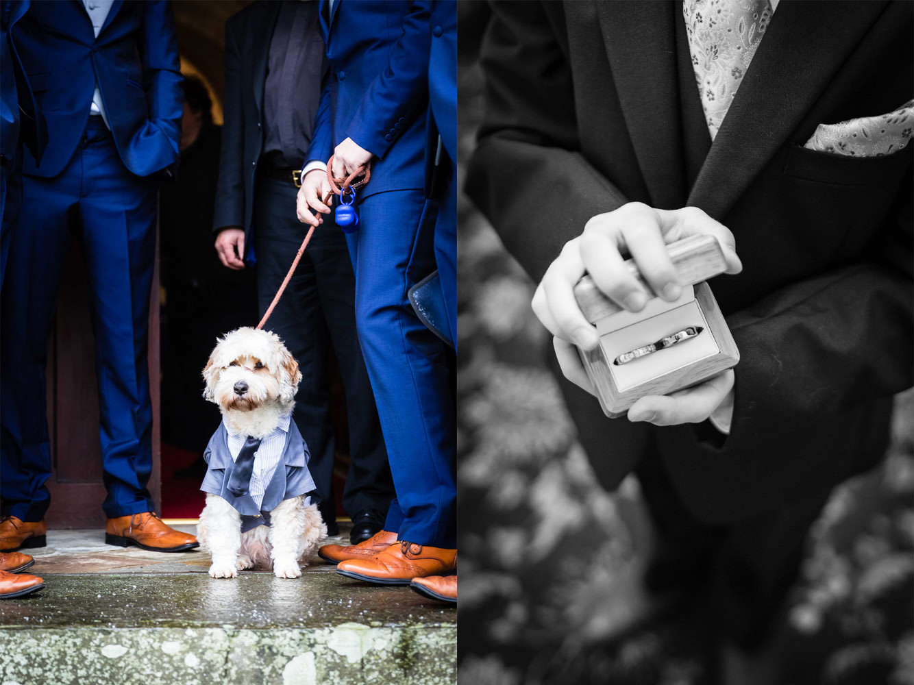 dog at wedding and wedding rings