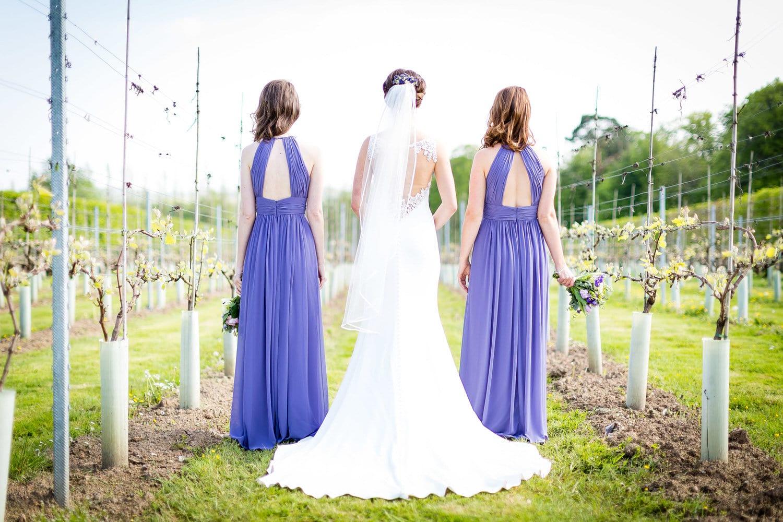 wedding photos in vineyard in llanerch vineyard