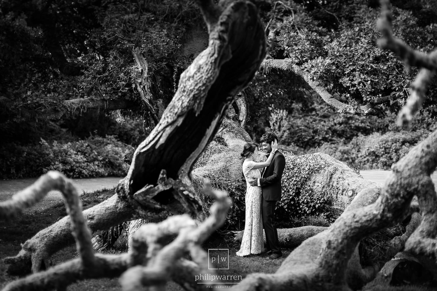 bride and groom in the old tree in plas glansevin