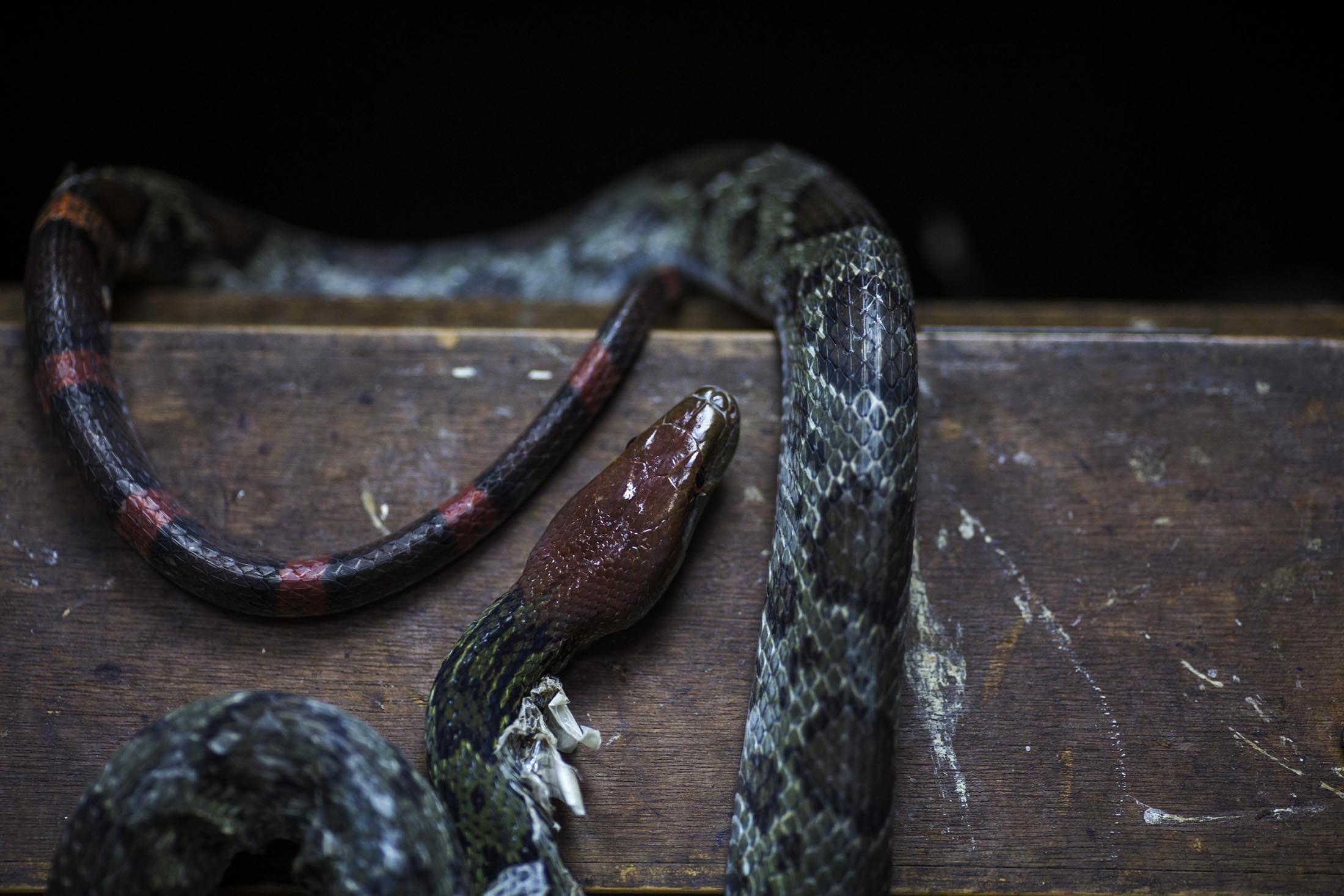 Snake16.jpg