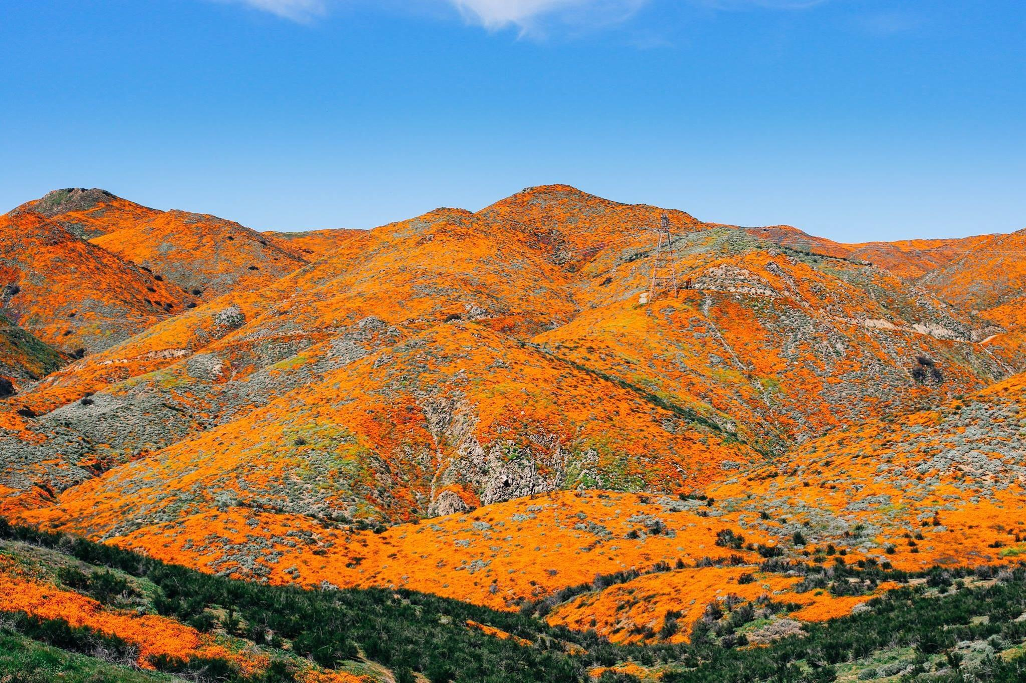 Lake Elsinore during the 2019 Super Bloom