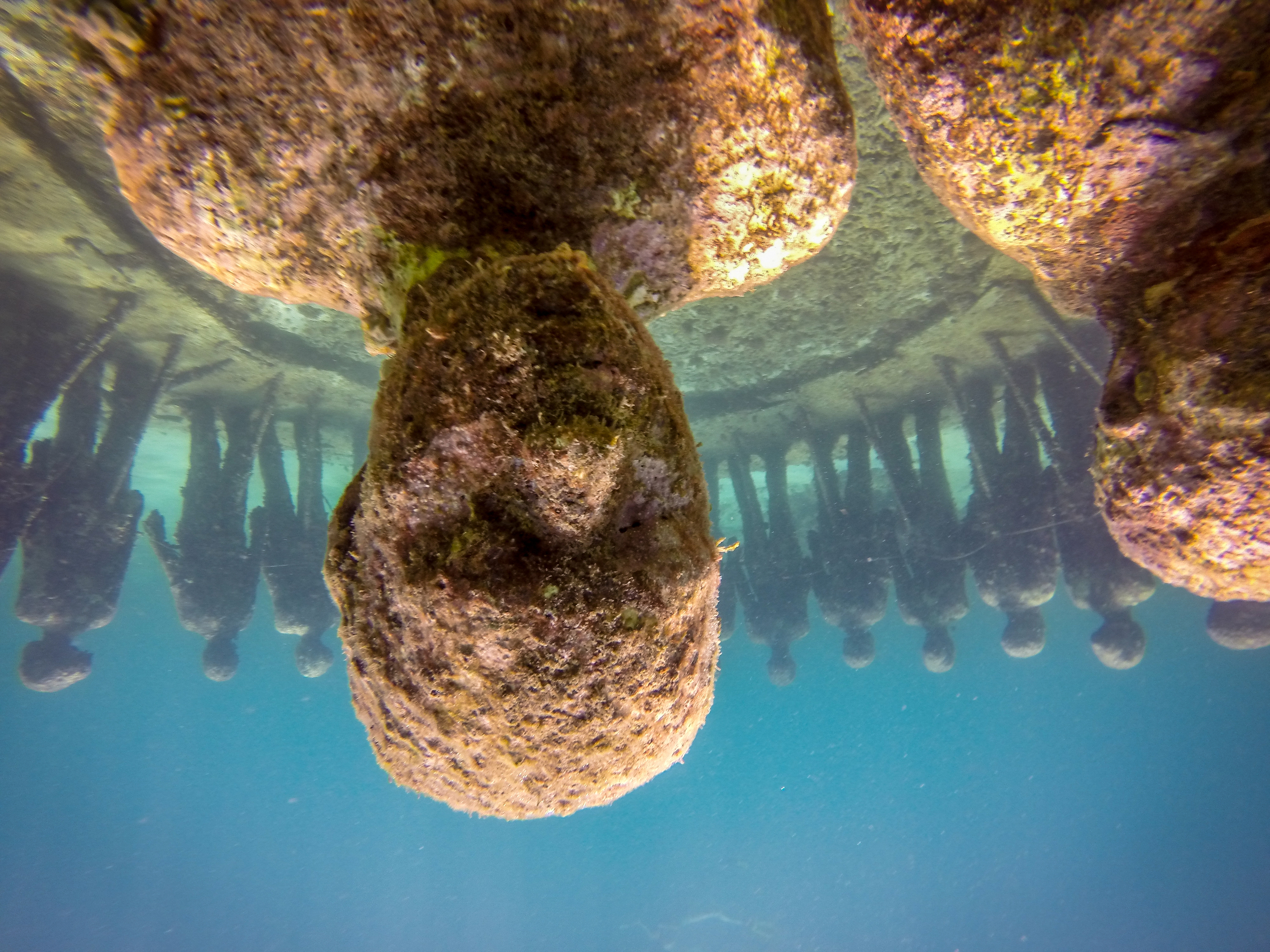 Snorkel The Statues in Grenada.