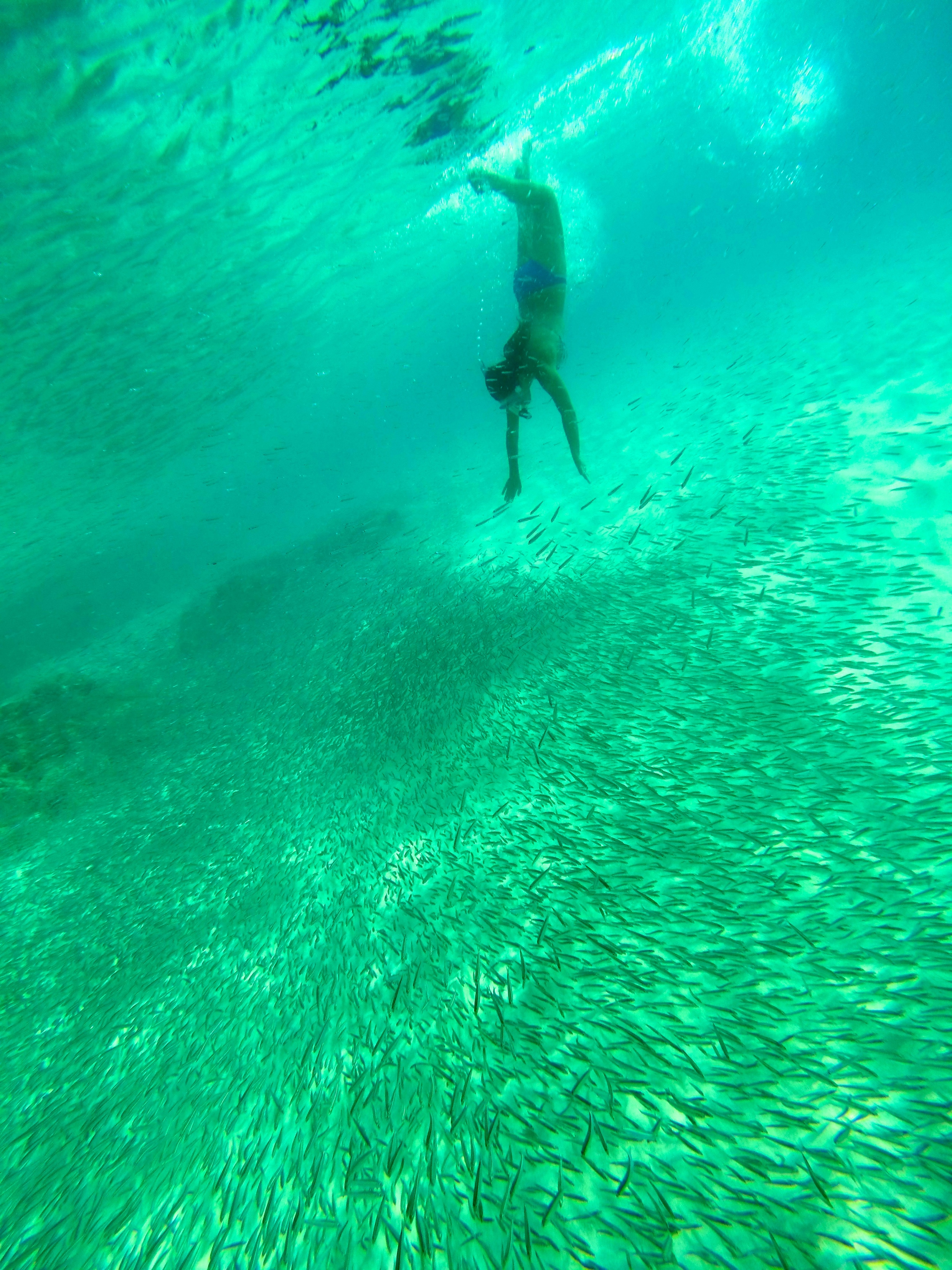 Play with the fish in Caneel Bay, St Joh, USVI