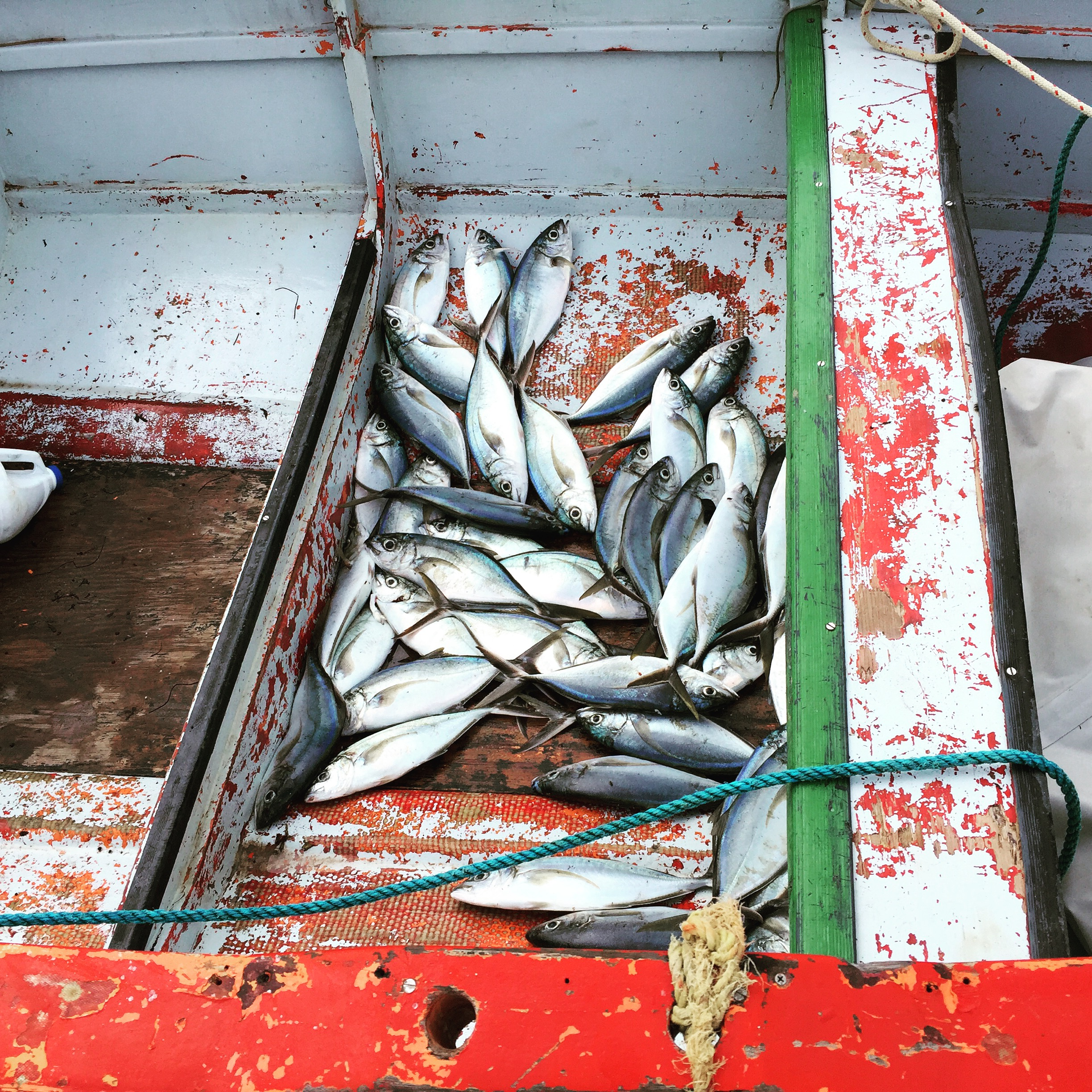 Catch of the Day, Bequia SVG.JPG