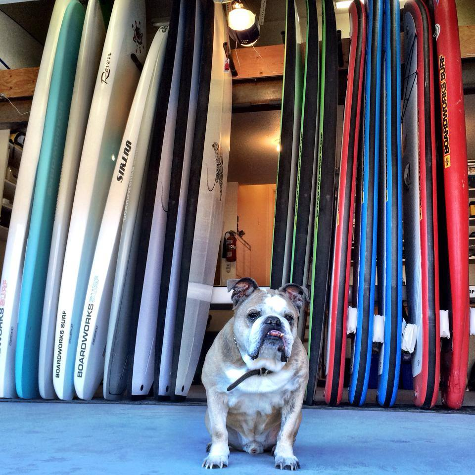 Oscar the Shop Dog welcoming folks to the Old Town Paddle & Co Headquarters.