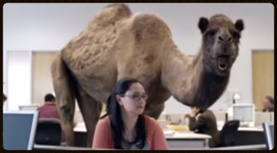 CamelOffice.png