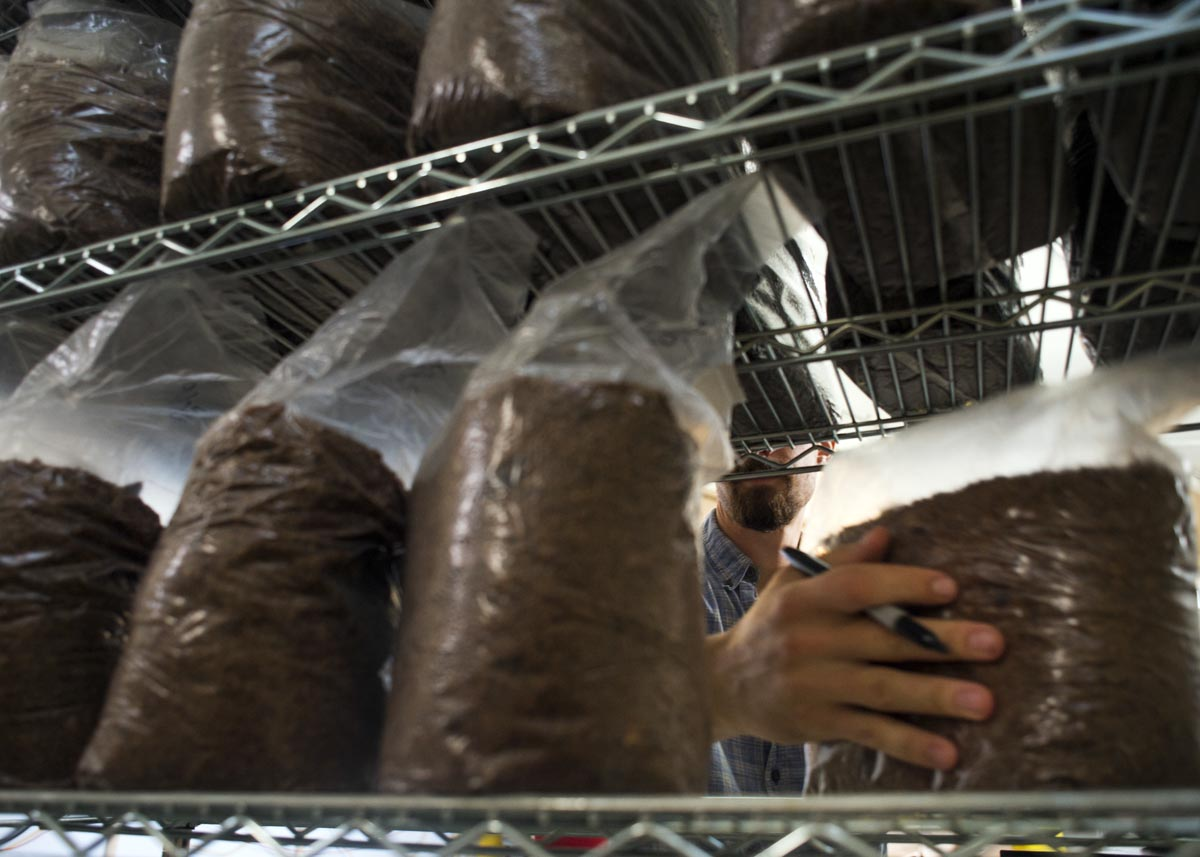 Steven Catlin marks bags of dirt mixture and spores that will eventually become mushrooms on Monday, September 19, 2016 at the Grow Local mushroom facility in Bayview. After the mixture in the bags turns white, the bags move to a cooler, more humid environment in the growing room.