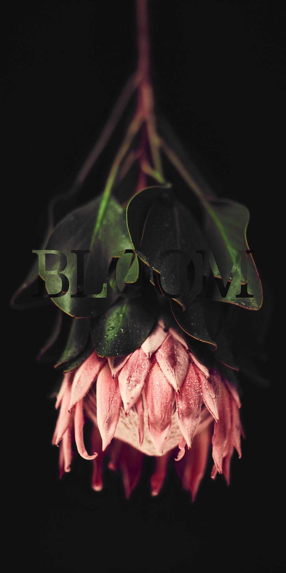 Protea Black.jpg