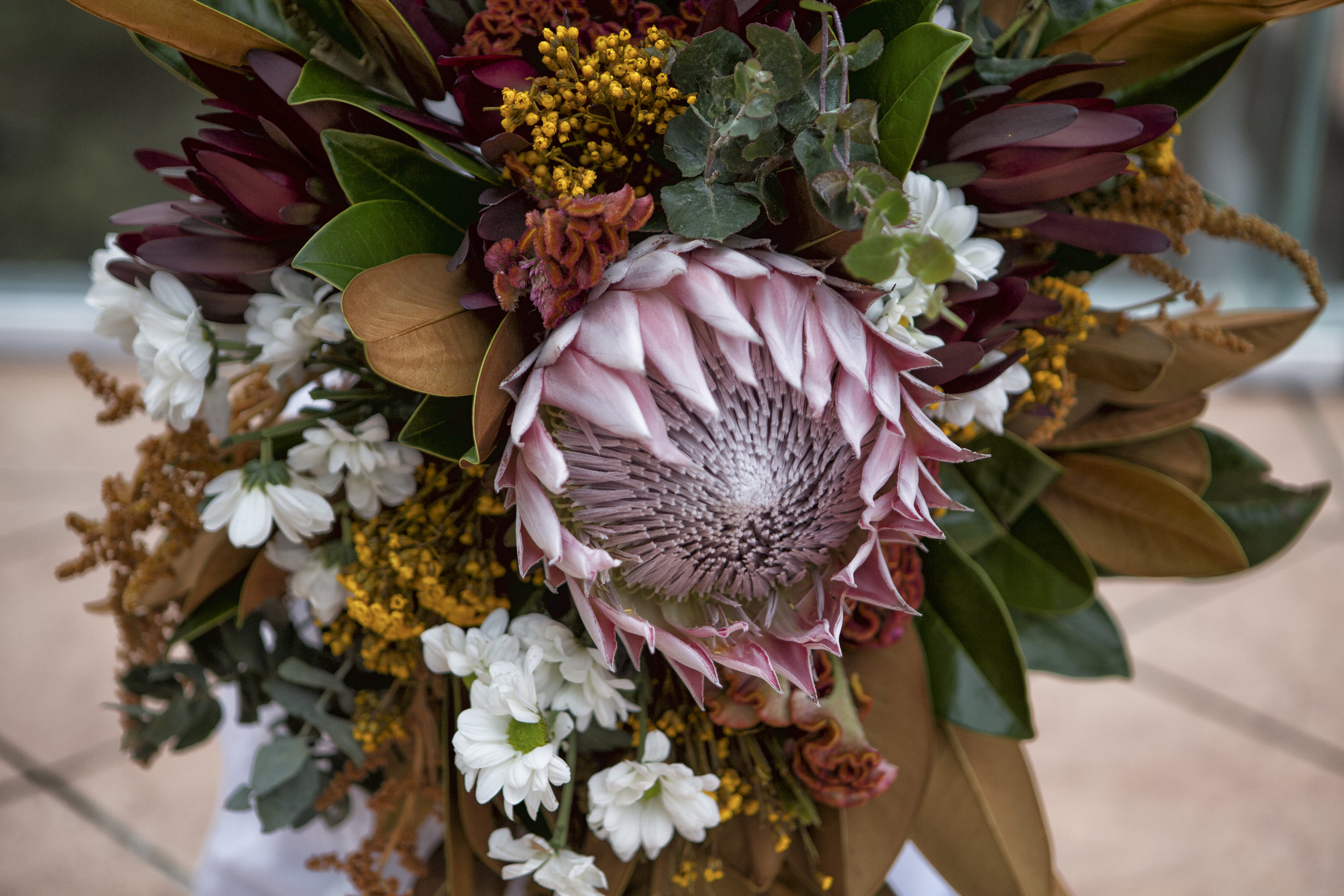 Australian natives wedding king protea.jpg
