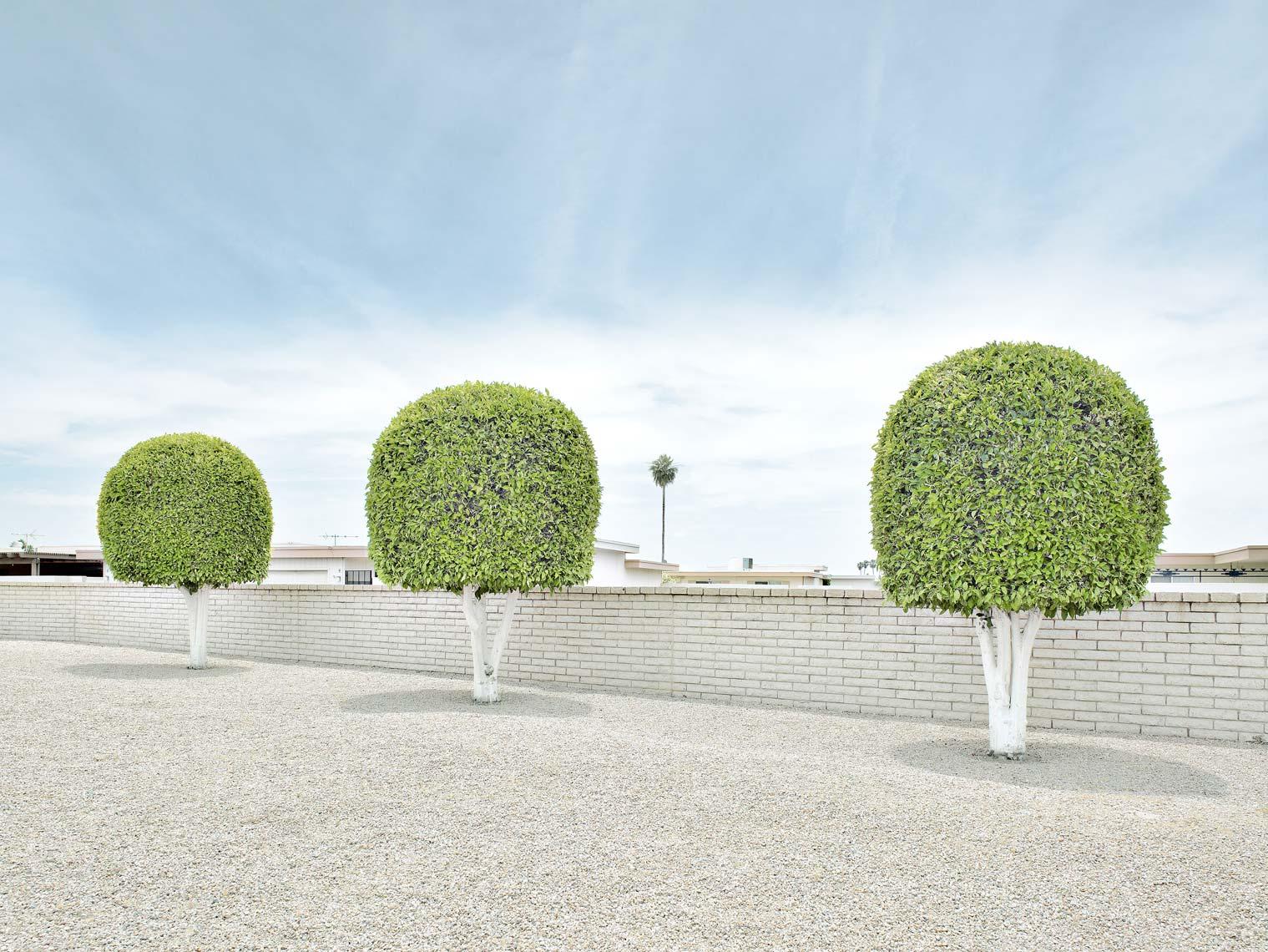 Sun-City-ThreeTrees2.jpg