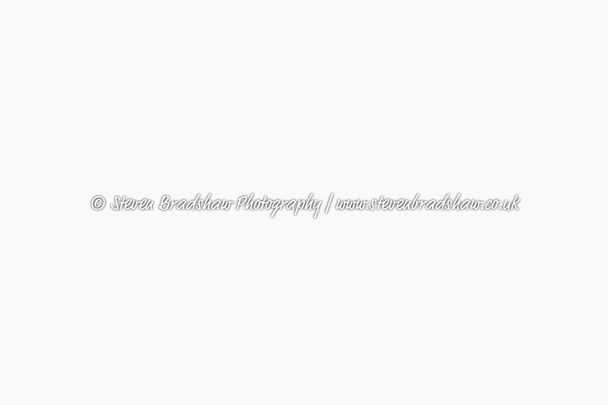 Bloglogo-3.jpg