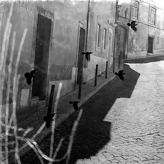 Extraite du livre  Paysage de Cerveau , photographie Adrienne Arth