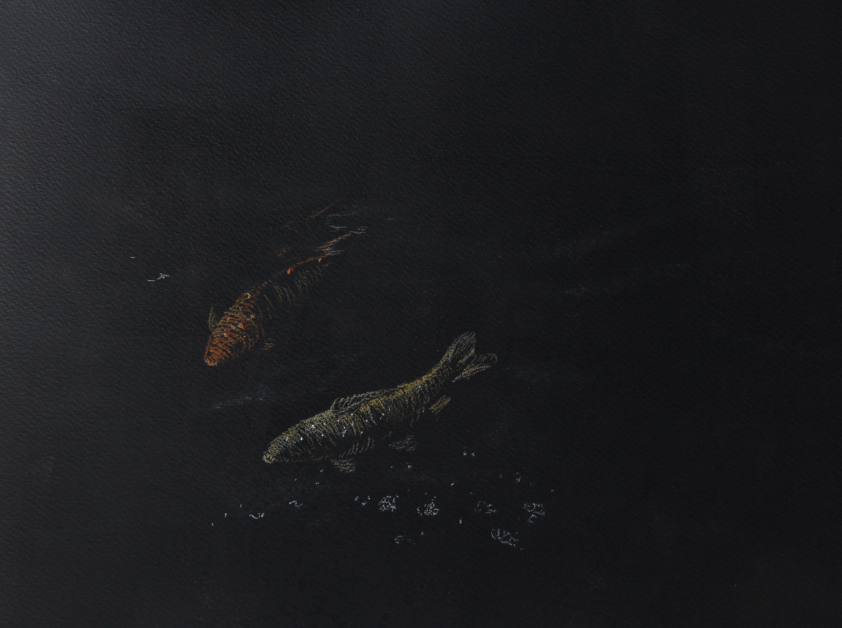 Fish in Darkness