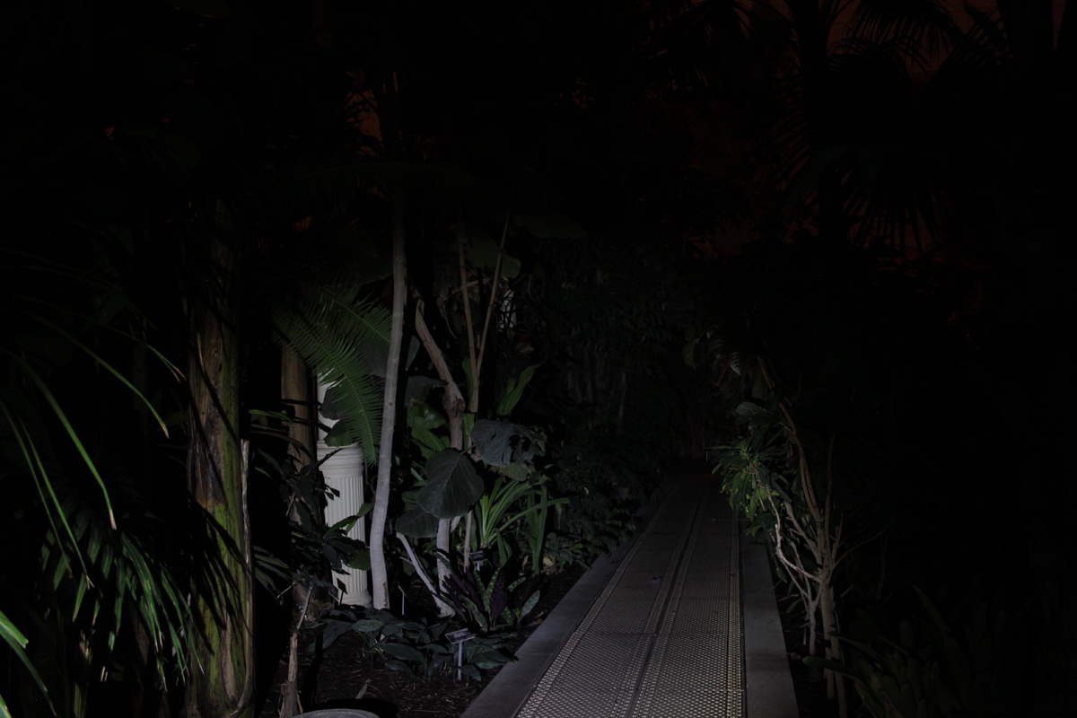 Night in the Great Palm House