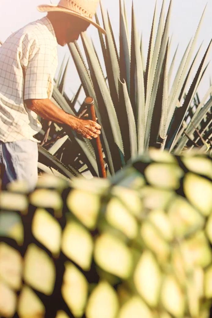 the hard way - Art Director - el Tesoro Tequila