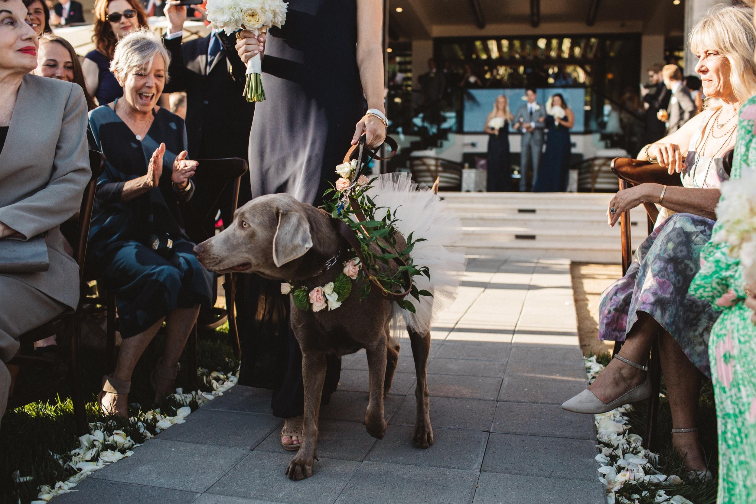 Vedros Wedding166.jpg