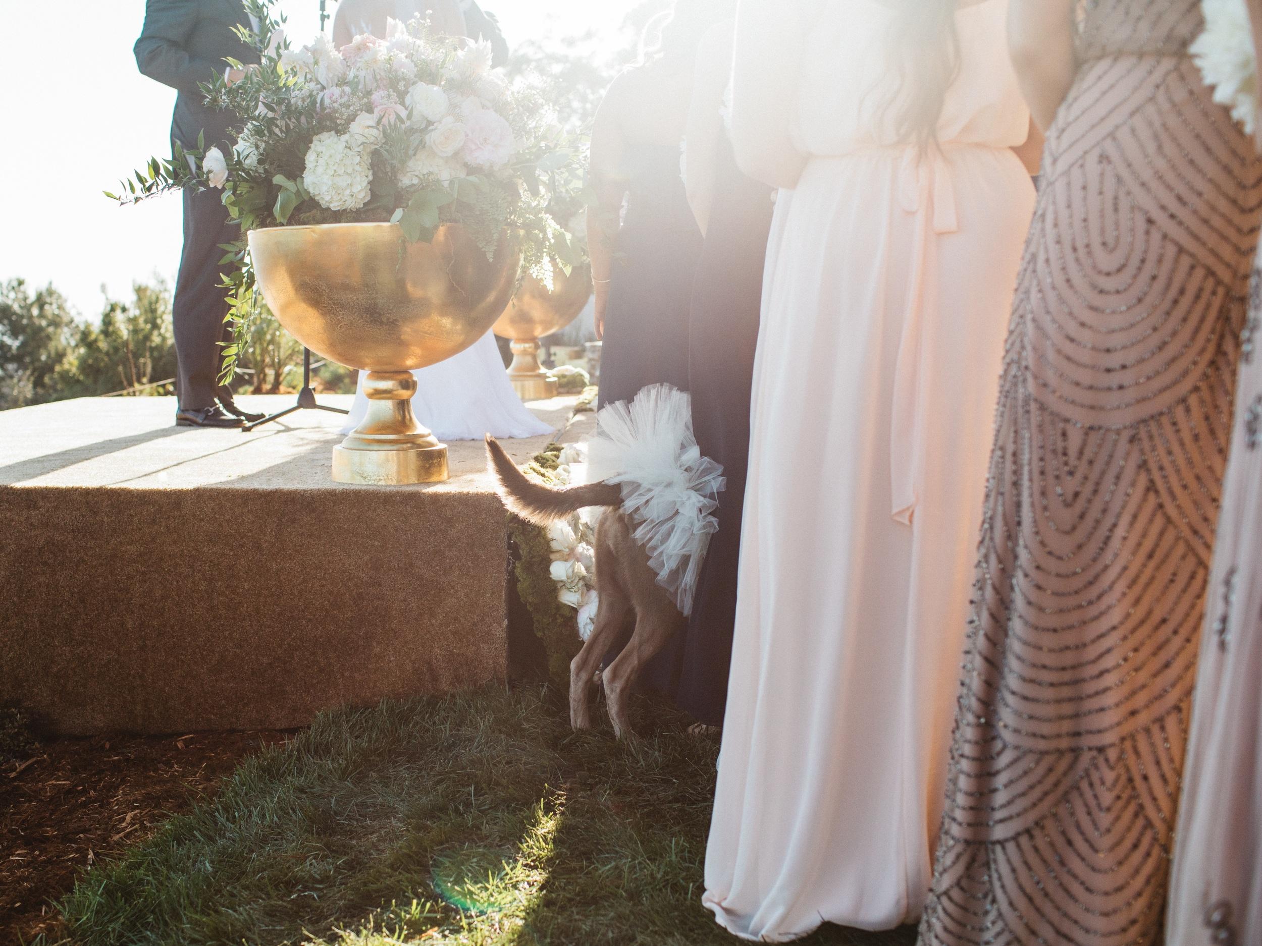 Vedros Wedding179.jpg