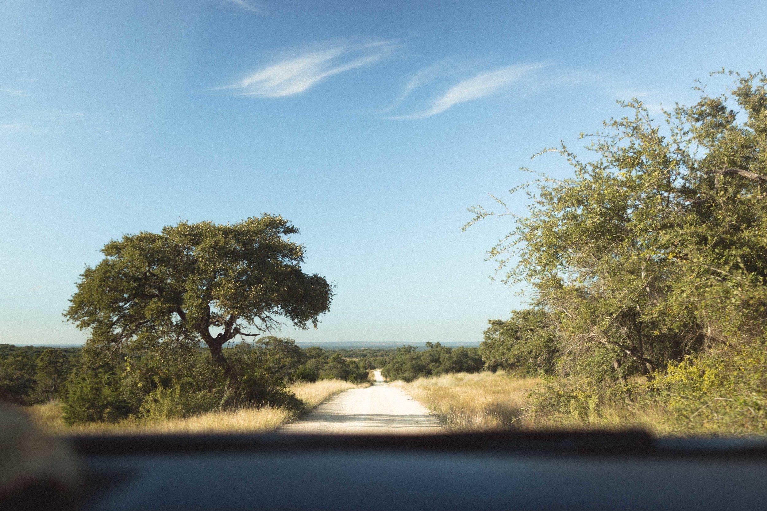 live oak-2.jpg