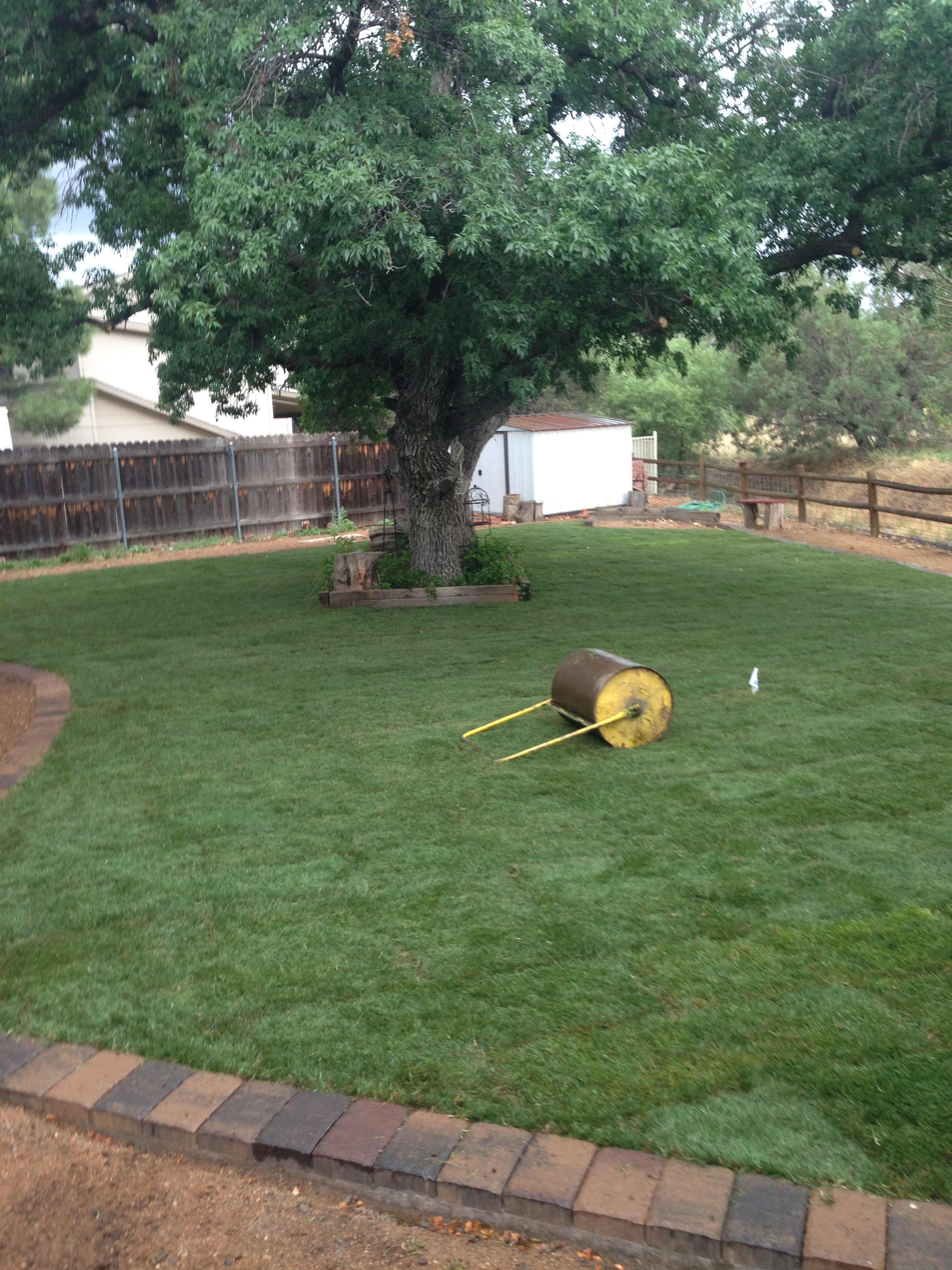 Fresh sod with paver border.