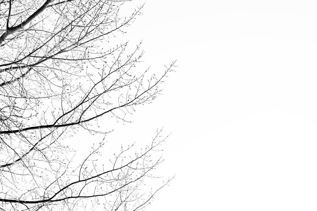 20141223 Saskatoon Christmas 2014 LJ 0184.jpg