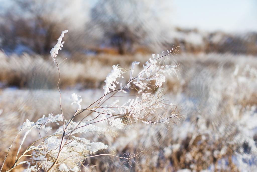 20141223 Saskatoon Christmas 2014 LJ 0299.jpg