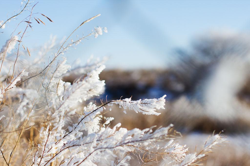 20141223 Saskatoon Christmas 2014 LJ 0302.jpg