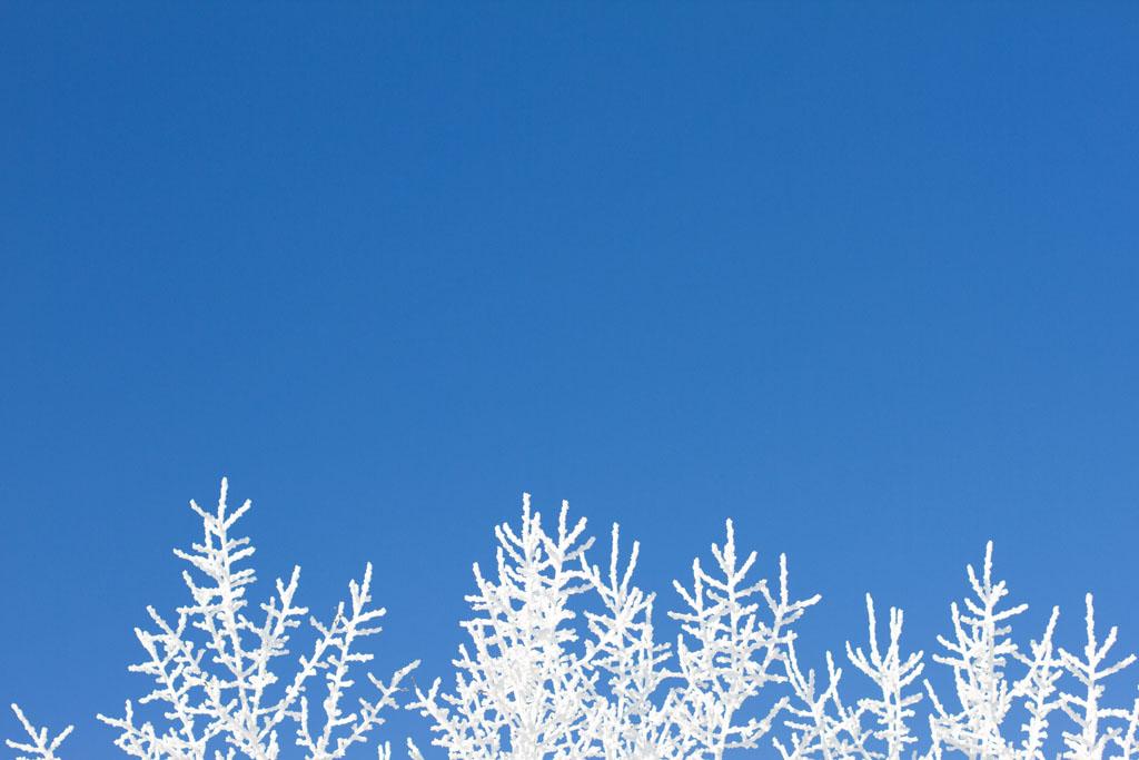 20141223 Saskatoon Christmas 2014 LJ 0319.jpg