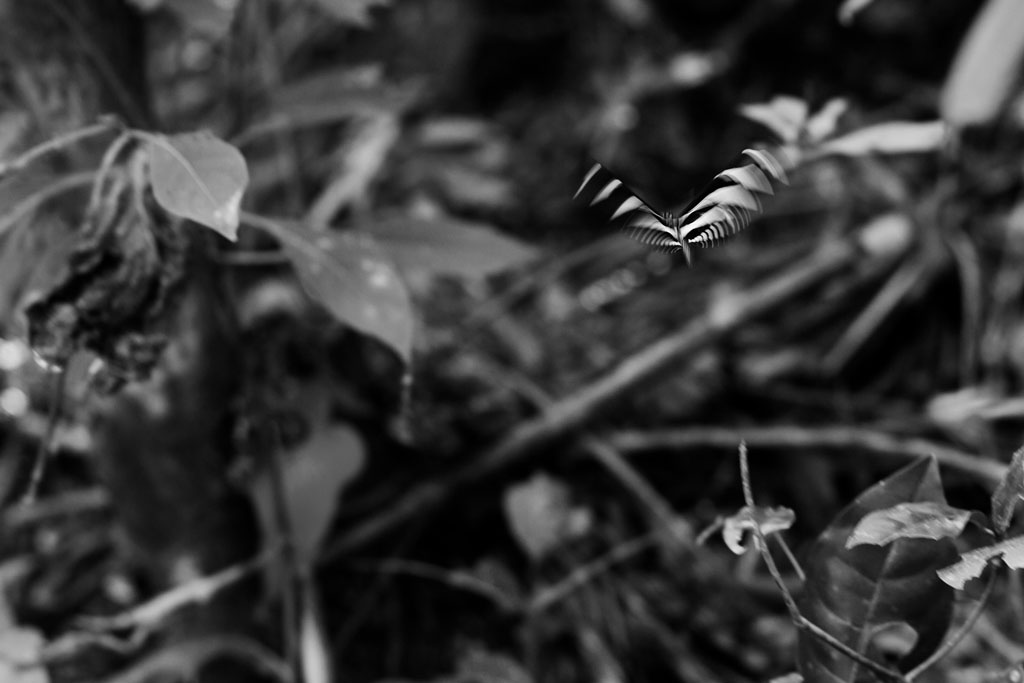 20171121 Mexico LJ 0862(B&W)CROPPED.jpg