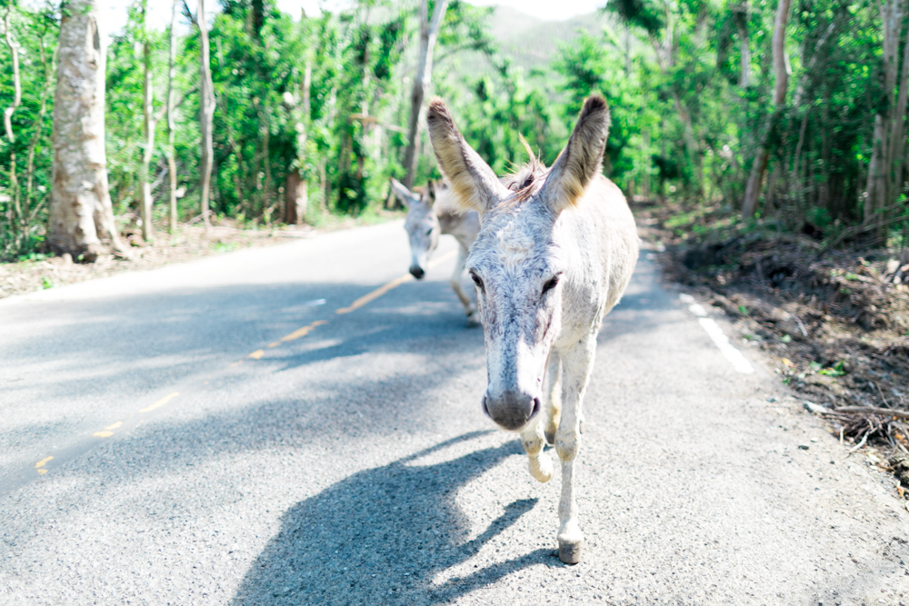 donkey-on-st-john