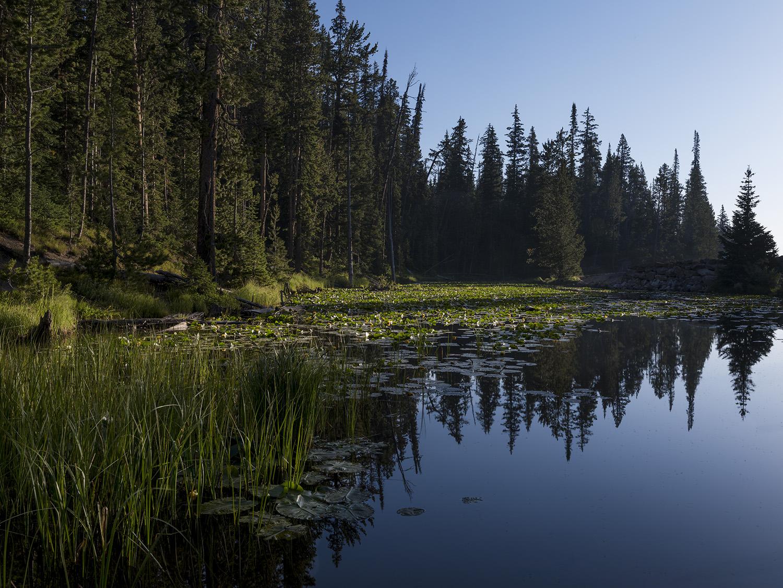 Morning Pond Web.jpg