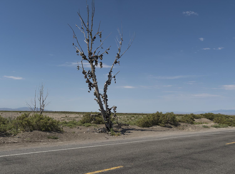 The Offering Tree Web.jpg
