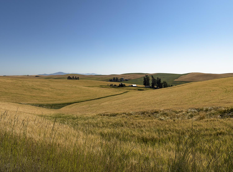 Wheat Fields WA Web.jpg