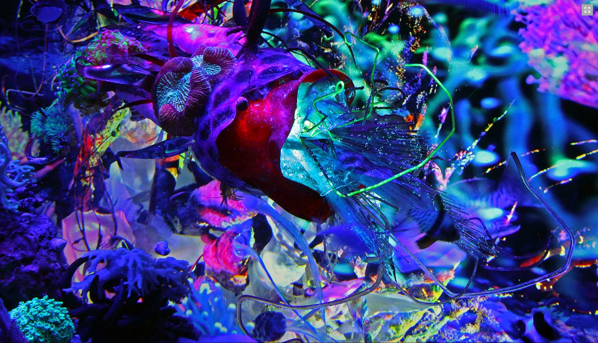 "still from ""Aquascaping Para-Space,"" by dNASAb"