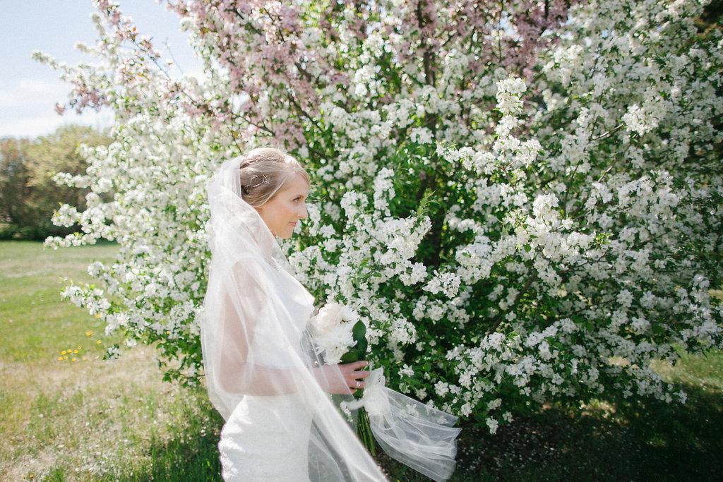 bride lilacs