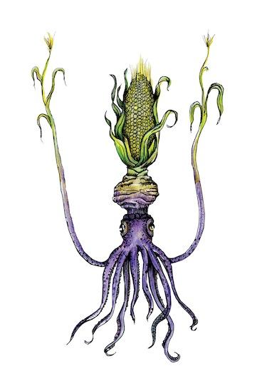 cornsquid