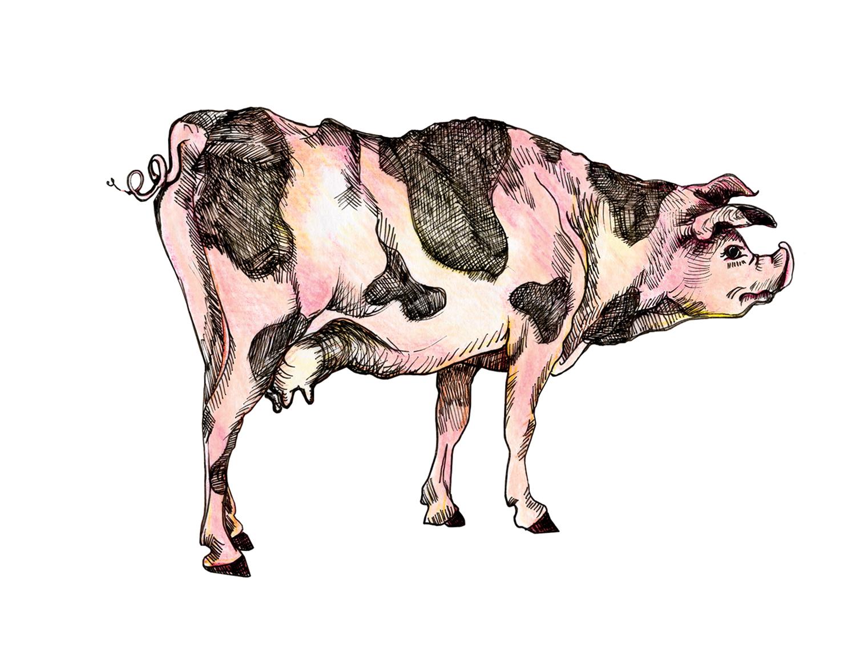 cow pig