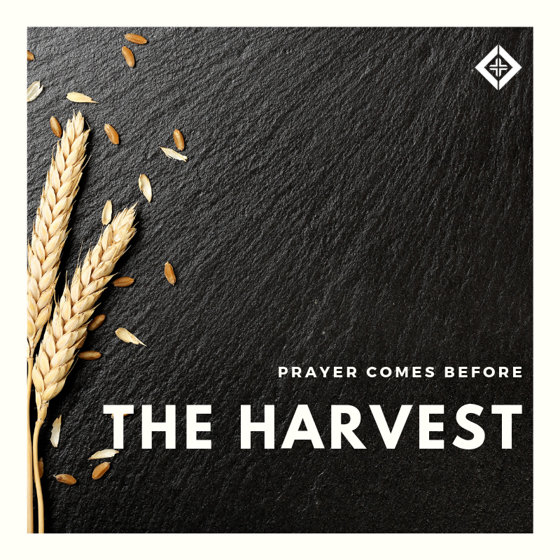 Prayer Before the Harvest.png