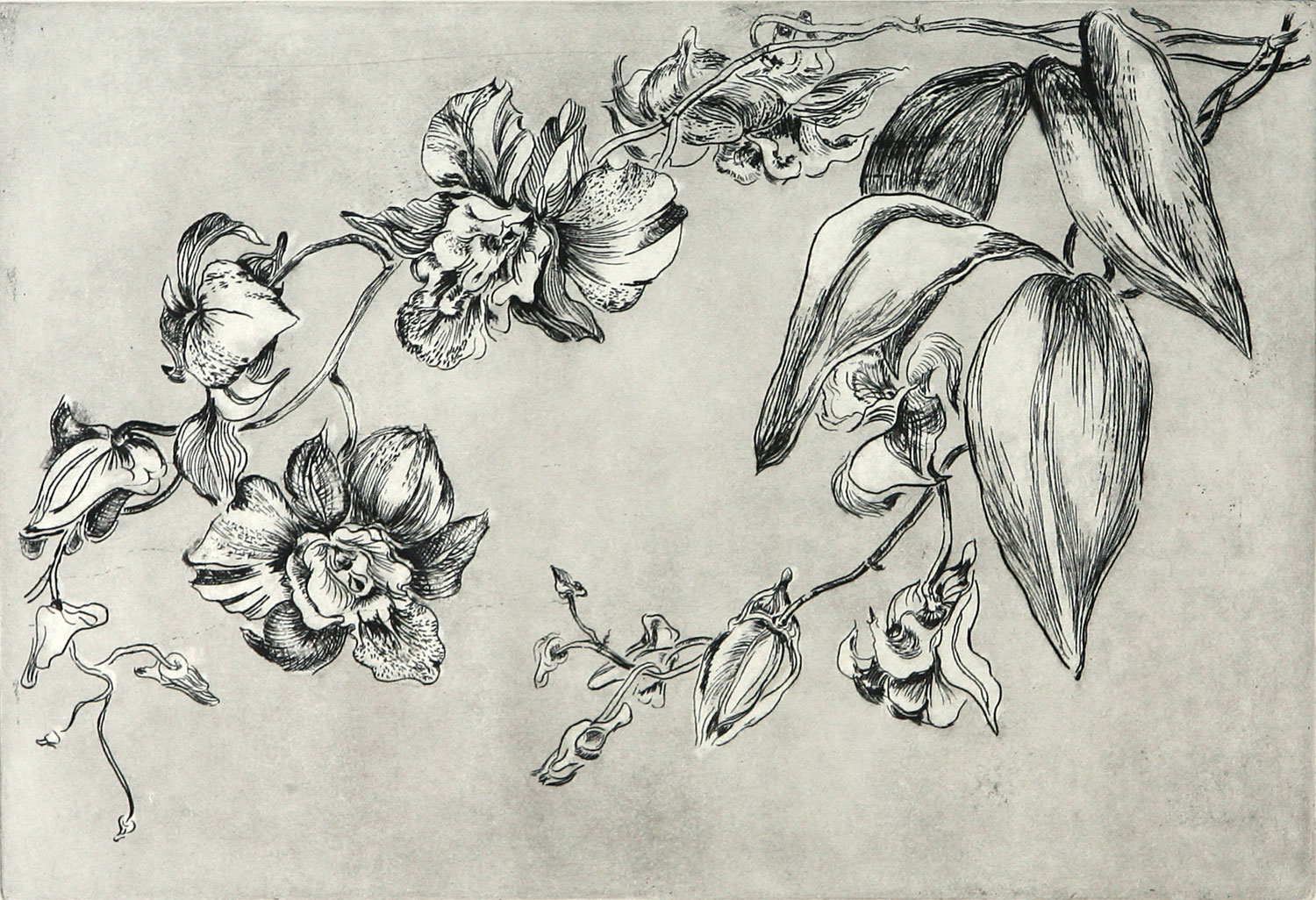 Orchids_etching.jpg