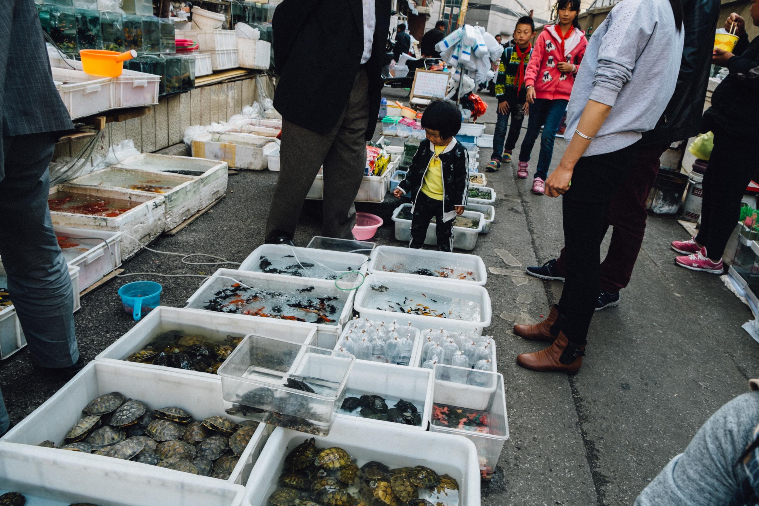 kunming2-22.jpg