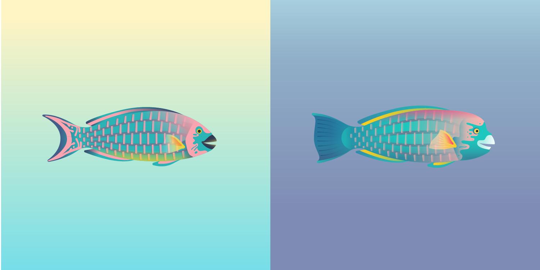 Parrotfish_edit-01.png