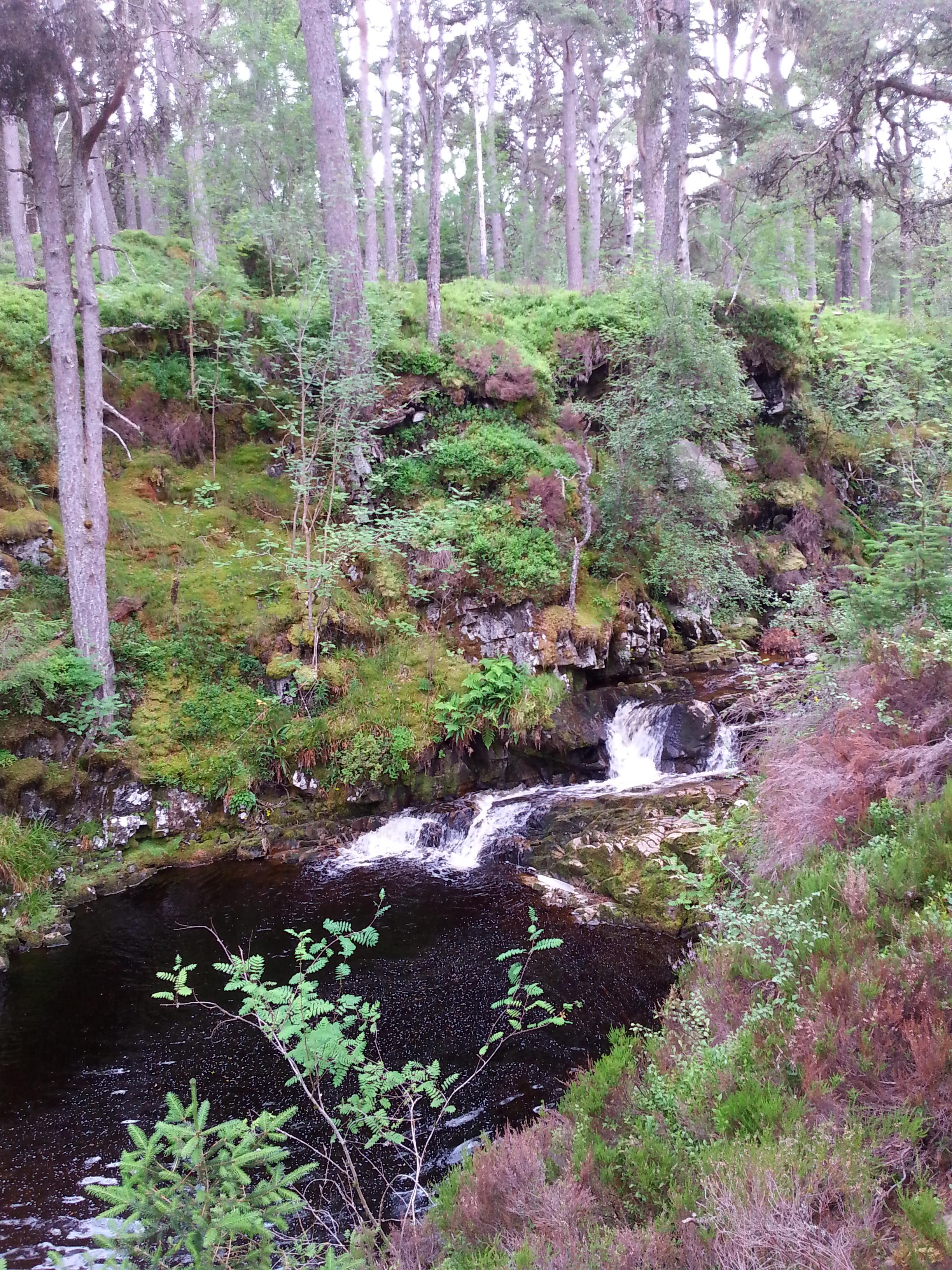 Rannoch Forest (2).jpg