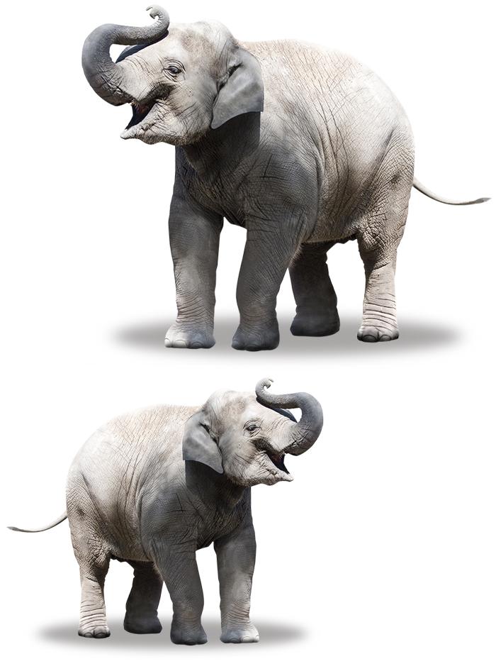 Elefant_pappert_21309607_XL.jpg