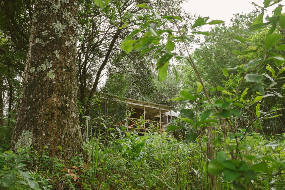 Old Pine Cabin Dylan Web-18.jpg