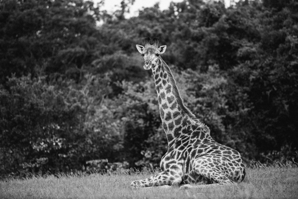 Safari Christmas Web-25.jpg