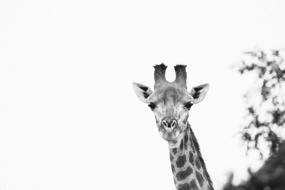 Safari Christmas Web-36.jpg
