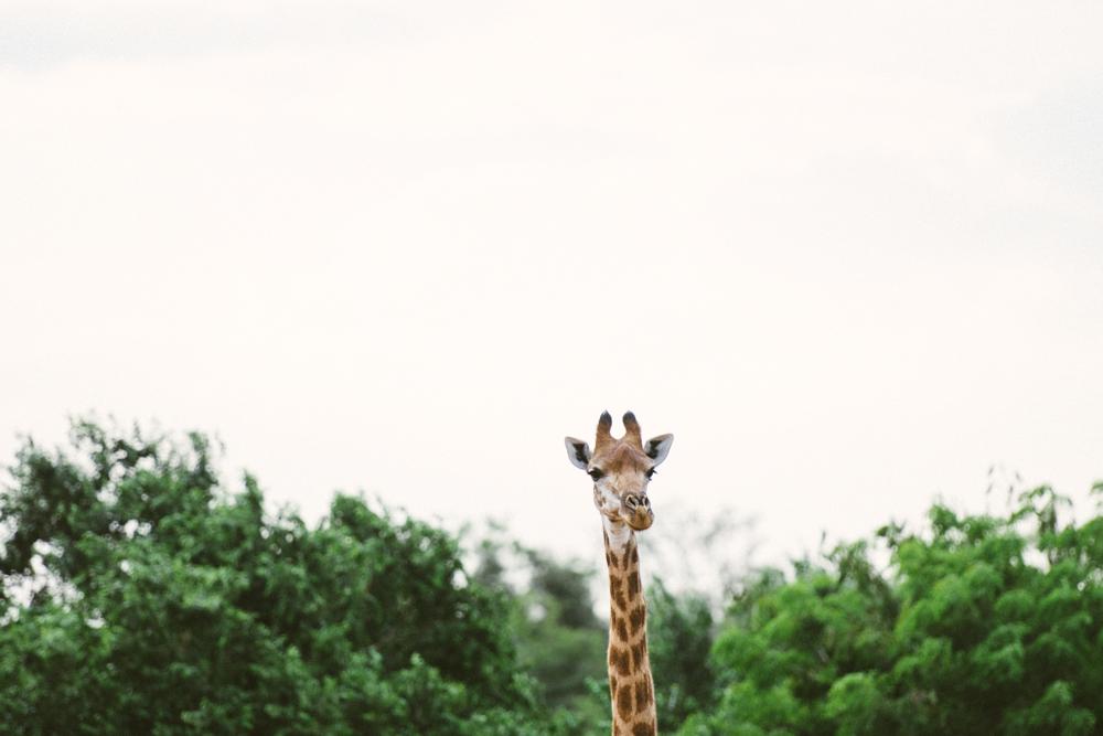 Safari Christmas Web-49.jpg